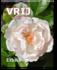 Aanbieding 3 edities van TIJDschrift VRIJ_3